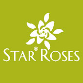 starRoses-g170