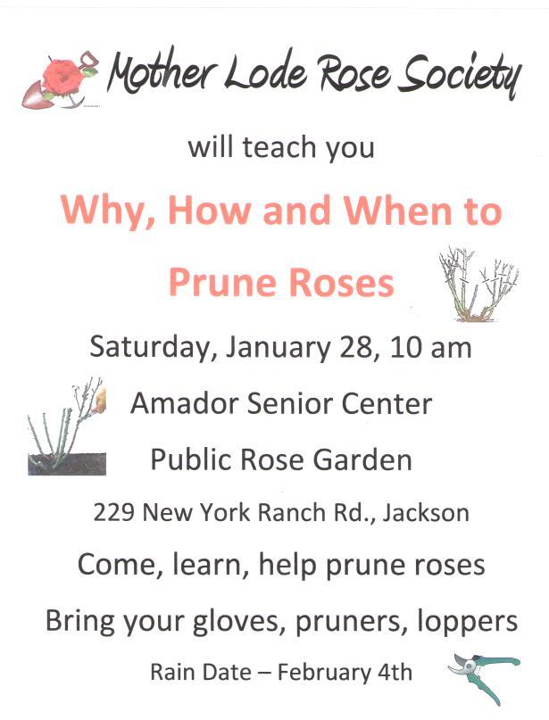 pruning-flyer